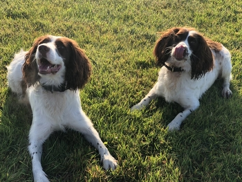 PD Buddy and Holly